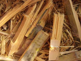 bamboo waste