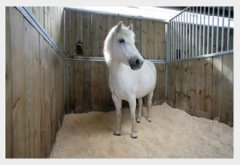 wood pellets horse bedding
