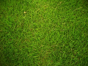 picture of green grass