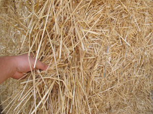 Make your own pellets from straw by pellet mill to solve waste problem wheat straw wheat straw sciox Choice Image